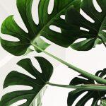 planten en airco